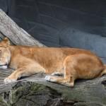 Hamburg Zoo 08